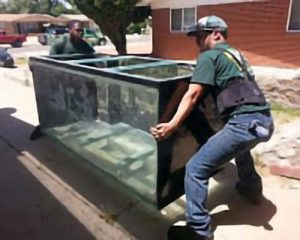 two movers with a large aquarium